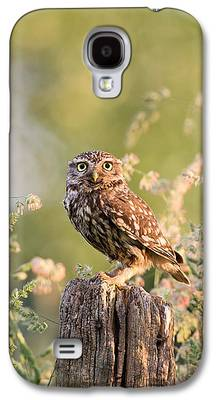 Early Spring Galaxy S4 Cases