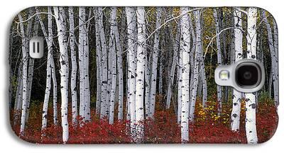 Autumn Trees Galaxy S4 Cases