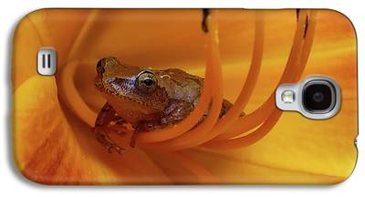 Spring Peepers Galaxy S4 Cases