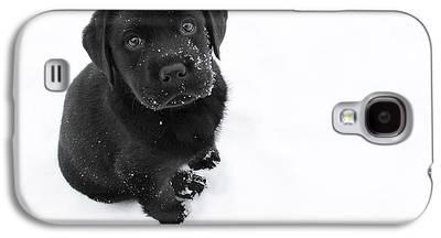 Black Dog Galaxy S4 Cases