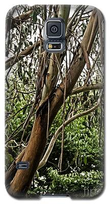 Gum Tree In Grunge Galaxy S5 Case
