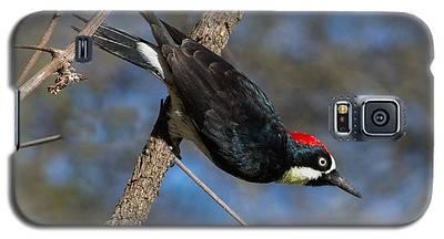 Acorn Woodpecker Galaxy S5 Case