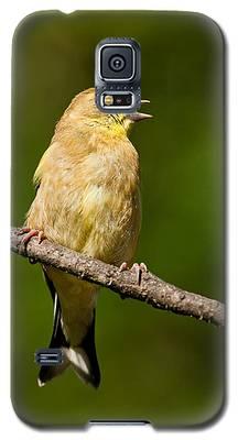 American Goldfinch Singing Galaxy S5 Case