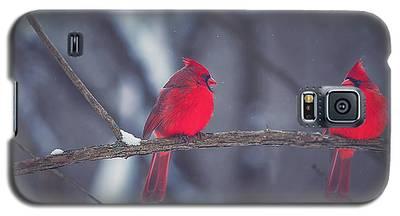 Cardinal Galaxy S5 Cases