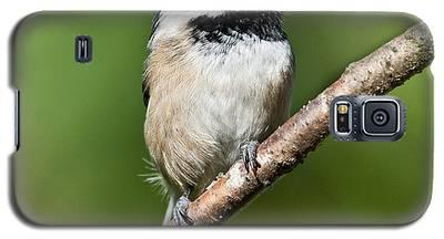 Black Capped Chickadee Galaxy S5 Case