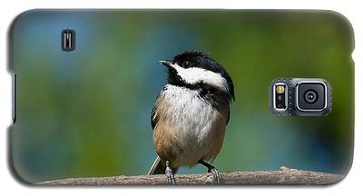 Black Capped Chickadee Perched On A Branch Galaxy S5 Case