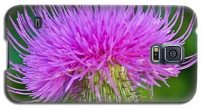 Blooming Common Thistle Galaxy S5 Case