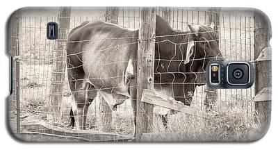 Brahman Bull Galaxy S5 Case