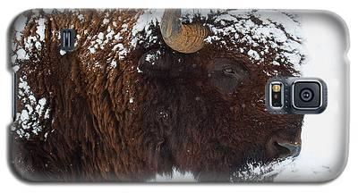 Buffalo Nickel Galaxy S5 Case