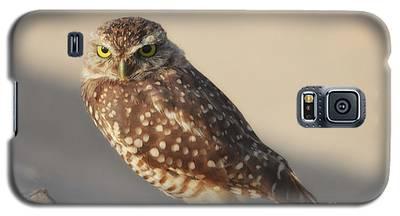 Burrowing Owl  Galaxy S5 Case