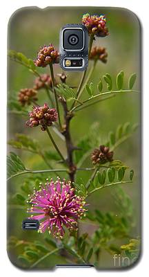 Catclaw  Mimosa Galaxy S5 Case