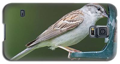 Chipping Sparrow Galaxy S5 Case