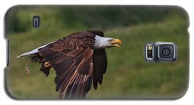 Eagle With Prey Galaxy S5 Case