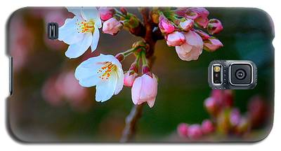 Early Cherry Blossoms Galaxy S5 Case