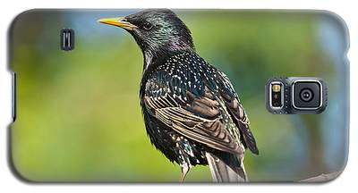 European Starling In A Tree Galaxy S5 Case