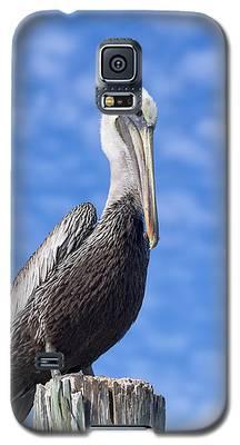 Florida Brown Pelican Galaxy S5 Case