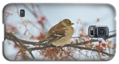 Goldfinch Brrrr Galaxy S5 Case