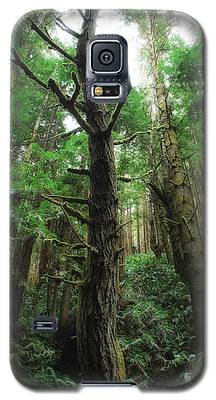 Groovin With The Redwoods Galaxy S5 Case