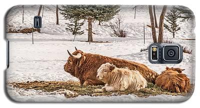 Highland Cow With Calves Galaxy S5 Case