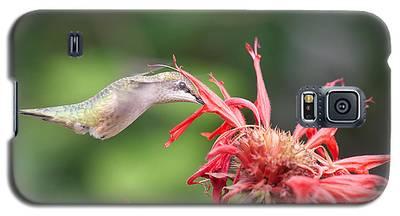 Hummingbird Defying Gravity Galaxy S5 Case