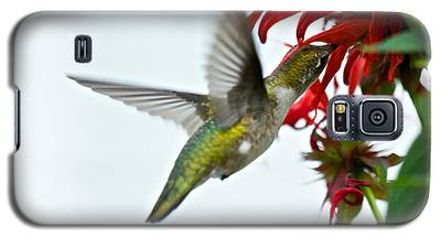 Hummingbird Focused On The Scarlet Bee Balm Galaxy S5 Case