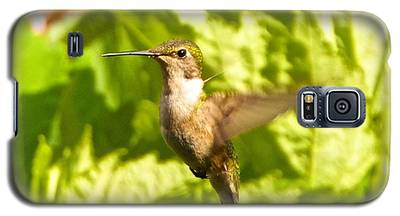 Hummingbird Highlighted By The Sun Galaxy S5 Case