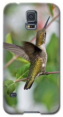 Hummingbird Reaching For The Blossoms Galaxy S5 Case