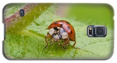 Ladybug On Boneset Leaf Galaxy S5 Case