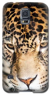 Leopard Resting Galaxy S5 Case