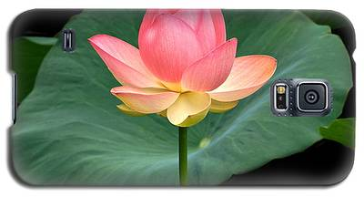 Lotus Of Late August Galaxy S5 Case