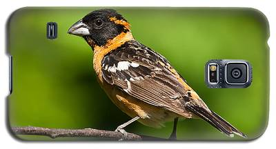 Male Black Headed Grosbeak In A Tree Galaxy S5 Case