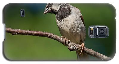 Male House Sparrow Perched In A Tree Galaxy S5 Case