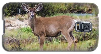 Mule Deer In Early Velvet Galaxy S5 Case