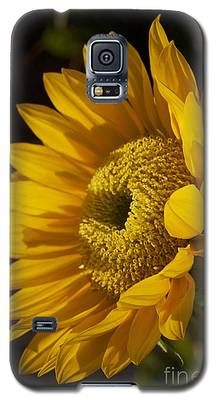 Sun-gold Galaxy S5 Case