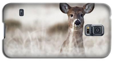 Portrait Of A Fawn Galaxy S5 Case