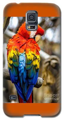 Preening Scarlet Macaw Galaxy S5 Case