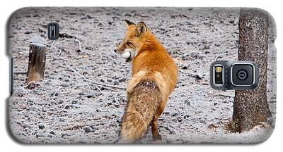 Red Fox Egg Thief Galaxy S5 Case