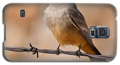 Say's Phoebe On A Barbed Wire Galaxy S5 Case