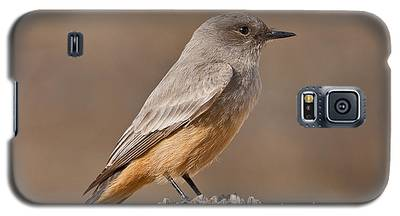 Say's Phoebe On A Fence Post Galaxy S5 Case