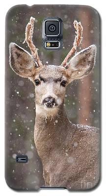 Snow Deer 1 Galaxy S5 Case