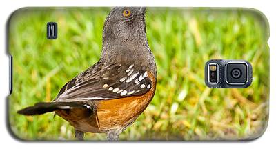 Spotted Towhee Looking Up Galaxy S5 Case