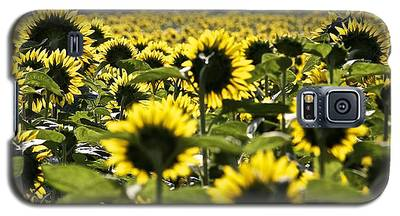 Sunflower Field Galaxy S5 Case