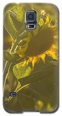 Sunlight And Sunflower Galaxy S5 Case