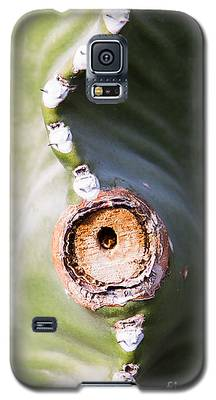 Sunlight Split On Cactus Knot Galaxy S5 Case
