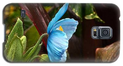 The Colors Of The Himalayan Blue Poppy Galaxy S5 Case