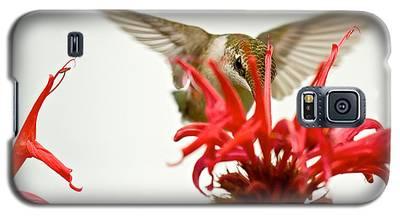 The Eye Of The Hummingbird Galaxy S5 Case