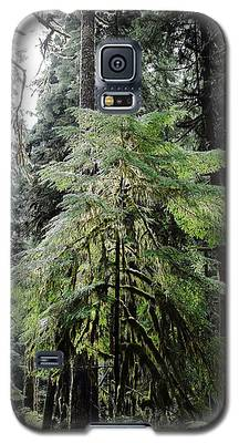 The Tree In The Forest Galaxy S5 Case
