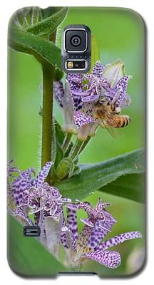 Toad Lily And Hover Fly Galaxy S5 Case