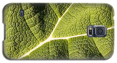 Veins Of A Leaf Galaxy S5 Case