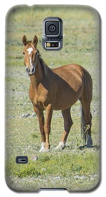 Wild Palomino Mare Galaxy S5 Case